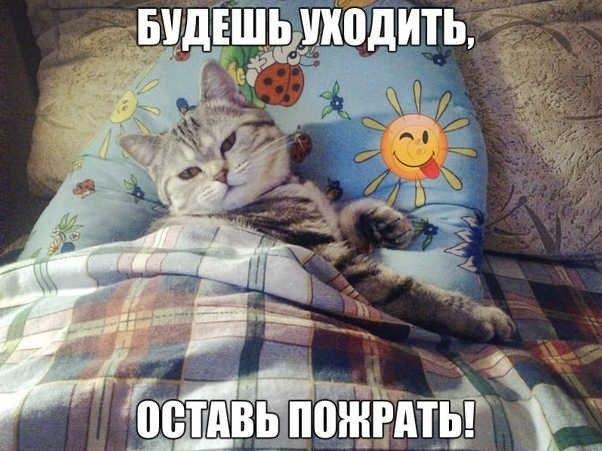 Кот: Будешь уходить, оставь пожрать