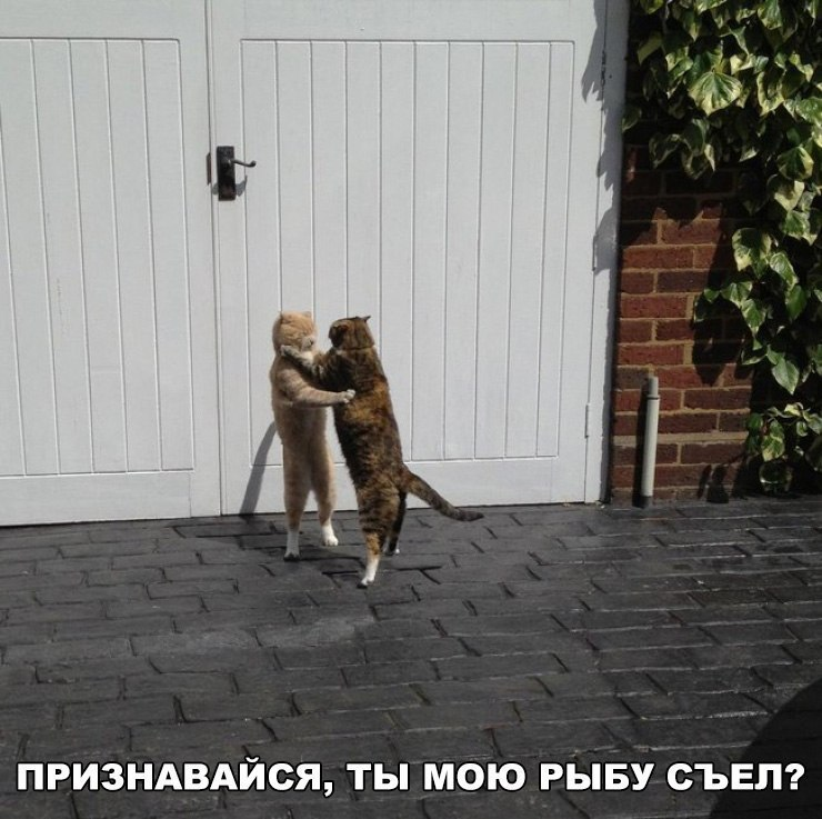Tb7uMr9 4 8 - Кролик приходит в публичный дом...
