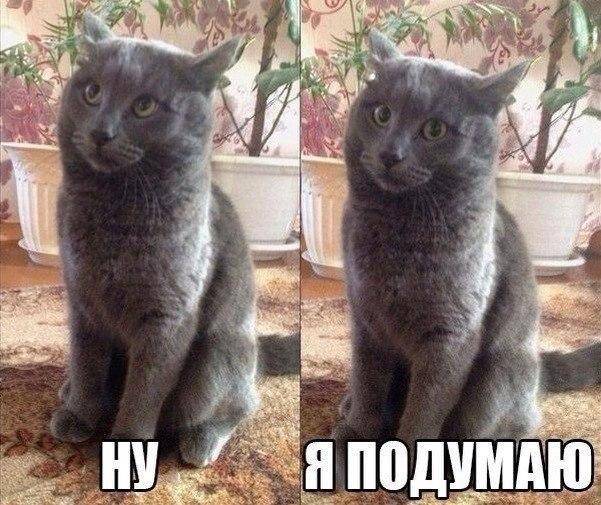 Нашел как-то Иван Царевич в лесу лягушонку - анекдот