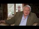 BBC Аттенборо 60 лет с дикой природой 1 Жизнь в объективе камеры Документальный 2012