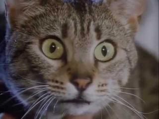 Интересные подробности из жизни Кошек. Документальный. Раньше они были дикими н ...