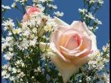 Цветы для любимых. Радмила Караклаич..wmv