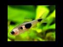 Нано рыбки. Часть 3