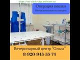 Операция кошки в Ветеринарном центре