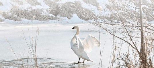 Купить снегоуборочную машину г. Карабаш с подчиненными его администрации населенными пунктами купить снегоуборочную машину село Довольное (рц)