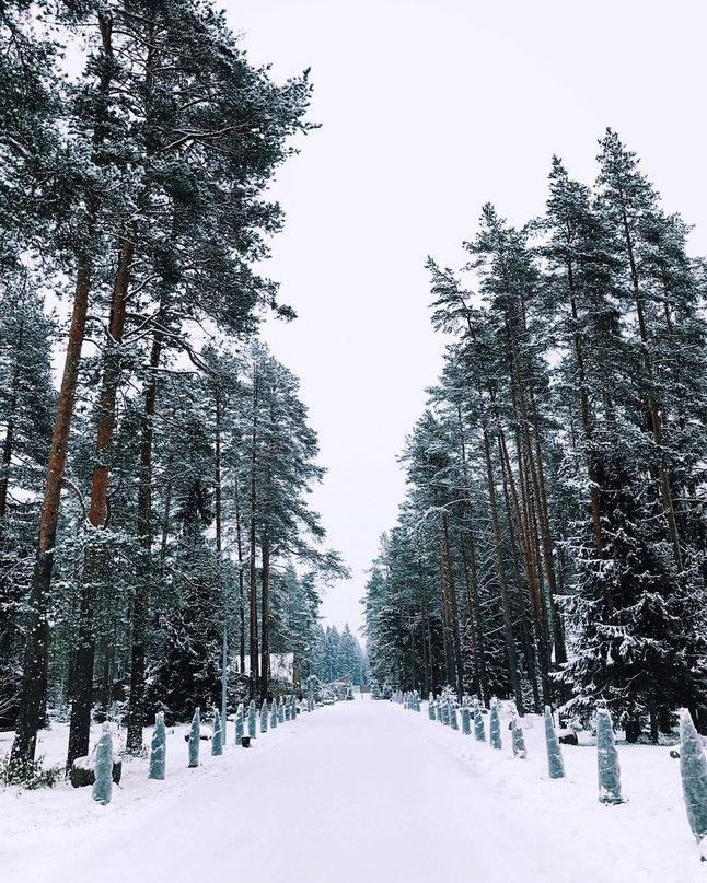 Господин Жидковский | Санкт-Петербург