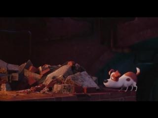 Смешные моменты из мультфильма Тайная жизнь домашних животных (Хомяк уматовый)