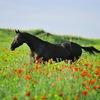 #подслушано коневодство Астрахани