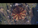OZORA Festival 2016 (Official Video)