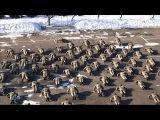 22PushupChallenge, Мостиський прикордонний загін