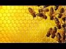 З сякерамі ўночы Лясгас супраць пчаляроў Лесхоз против пчел