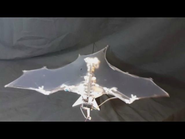 Інжынеры з ЗША прадставілі механічны кажан I Ученые из США Белсат