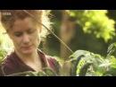 Edible Garden 1 Peas Beans - Homesteading Self-Sufficiency