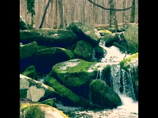 Watching the water break over a nameless creek at Great Smoky Mountains nationalpark in N. Carolina really is 6secondsofcalm natureaddict