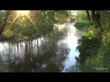 Река. Природа. Пение птиц. Журчание воды. Солнце в ветвях.