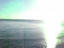 дельфины на диком пляже