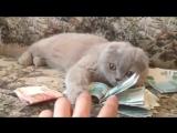 кошка деньгами