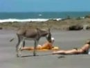 Осёл на пляже