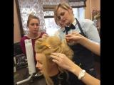 Студия Бигуди! Семинар по причёскам!