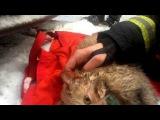 Пожарные в Москве спасли кошку, надышавшуюся дымом при пожаре