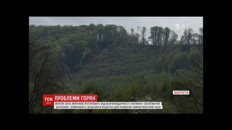 Жителі закарпатського села потерпають від нещадної вирубки лісів