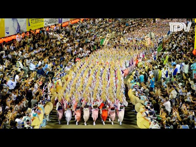 阿波踊り2016 総集編 Awaodori Festival in Tokushima, Japan