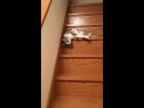 ох уж эти жидкие коты))