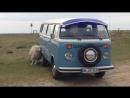 Volkswagen Bulli - Love