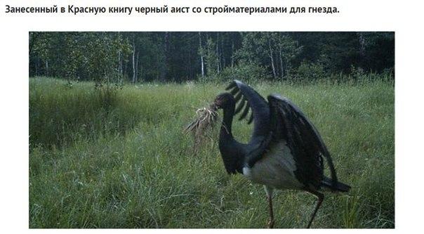 Фото №456260672 со страницы Валерии Андреевой