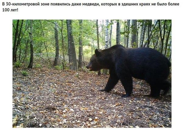 Фото №456260674 со страницы Валерии Андреевой
