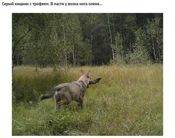 Фото №456260677 со страницы Валерии Андреевой