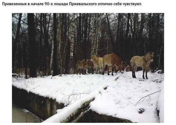 Фото №456260679 со страницы Валерии Андреевой