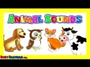 Animal Sounds Song - Kids Learning Nursery Rhymes, Learn the Sounds of the Animals, Baby Songs,_low