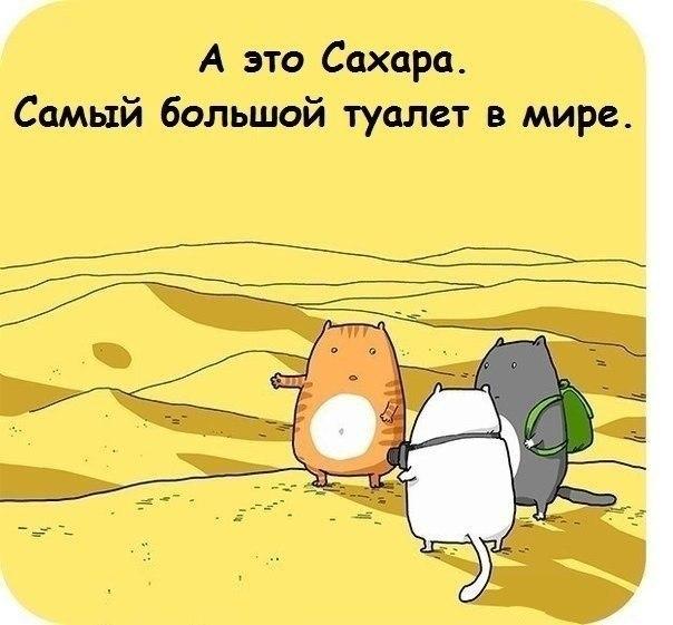 Фото №456247139 со страницы Сергея Кондрашова