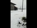 мурава под снігом