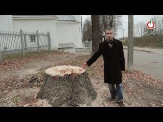 22.10.2016. Люди за и против деревьев в Пскове