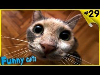 Смешные коты и кошки 2016 Угар Смех Супер Ржачь Приколы с котами и кошками 20161