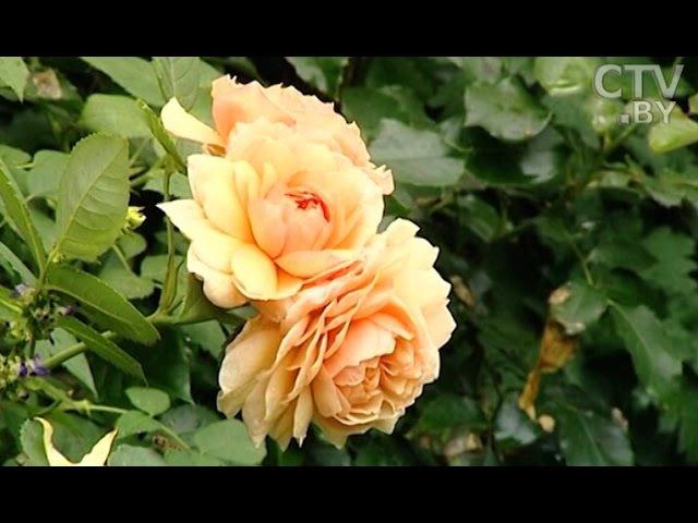 Создать сад мечты секреты садоводства от Юлии Тадеуш