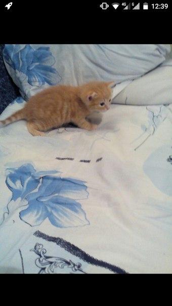 #Животные@bankakomi Возьму в добрые руки вот такого рыжего мальчугана