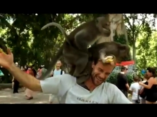 Hey, remember that time monkeys had sex on your head?