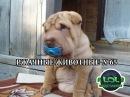 Видео приколы с животными рвут интернет! Грусть меняю на смех! Засмеялся - подпис