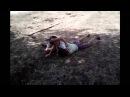 Ему 7 лет кинул на бедро и взял на удушение под музыку!!