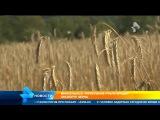 Минсельхоз  Укрепление рубля вредит экспорту зерна
