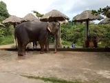Мойка слонов на острове Самуи