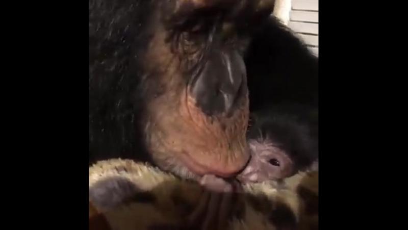Любящая мамочка