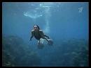 Бермудский треугольник т ф США 1996 дружба с дельфинами подборка сцен