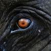 Птз за Международный запрет цирка с животными