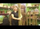 Русская ива Видео обзор вертикальной живой изгороди из ивы