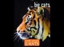 Анатомия крупнейших животных Большие кошки смотреть кино онлайн