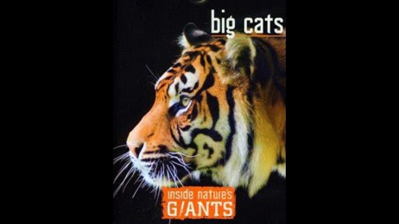 Анатомия крупнейших животных- Большие кошки смотреть кино онлайн